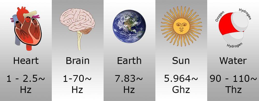 heart brain earth sun water